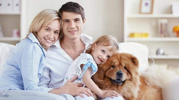 Wills & Trusts dog-young-family Direct Wills Alfreton